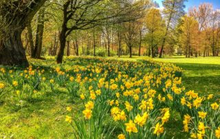 Spring Landscaping tips henrico va