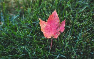 Aerating and overseeding - landscaping- richmond va