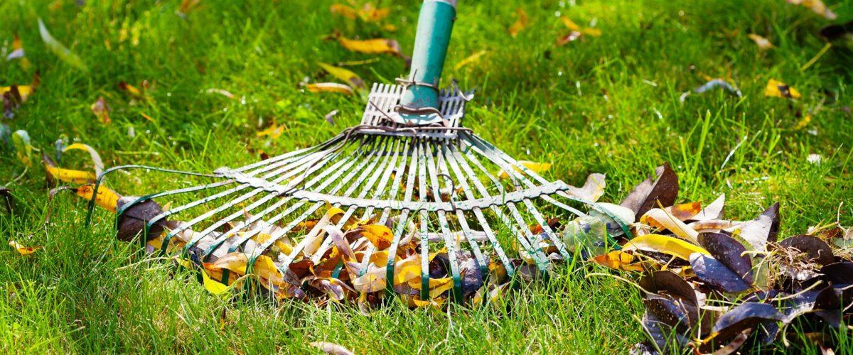 Autumn Leaf Raking Tips