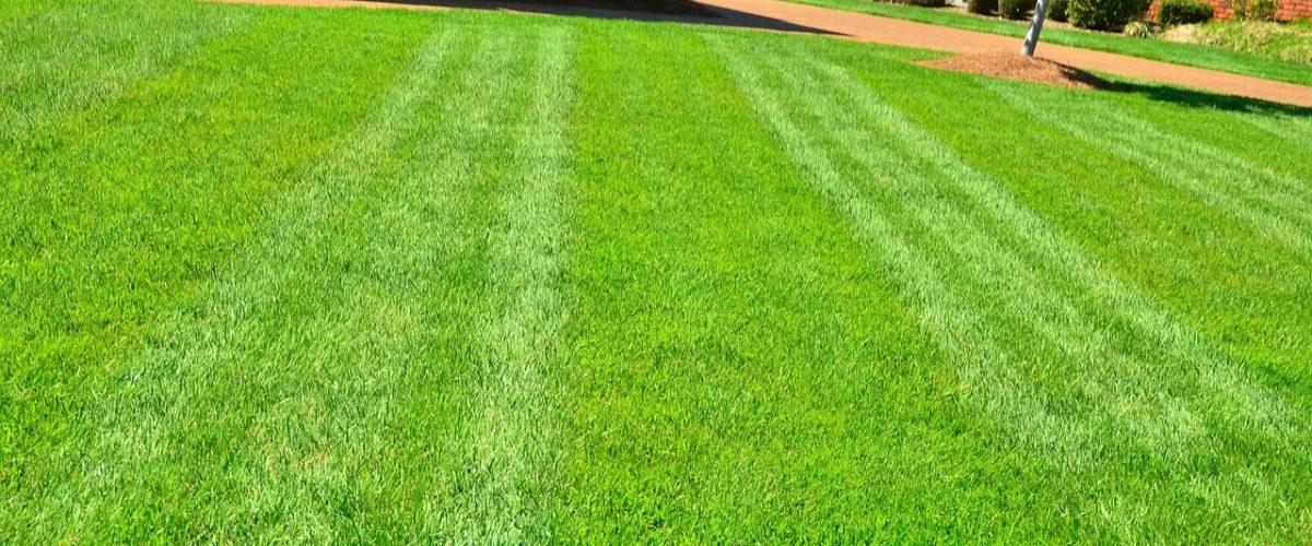 Why Fertilize Your Lawn