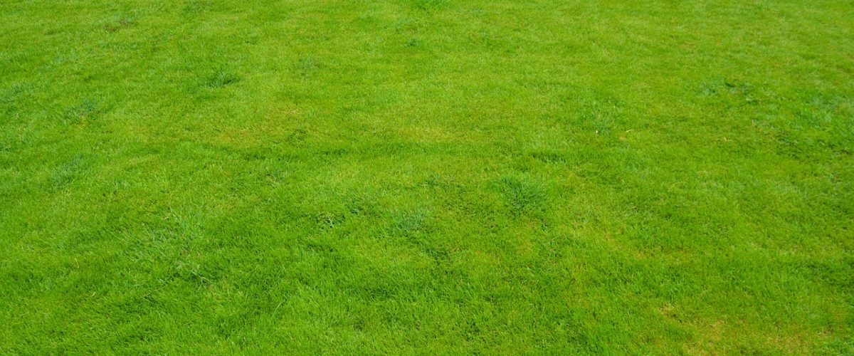 Fungicide for your yard