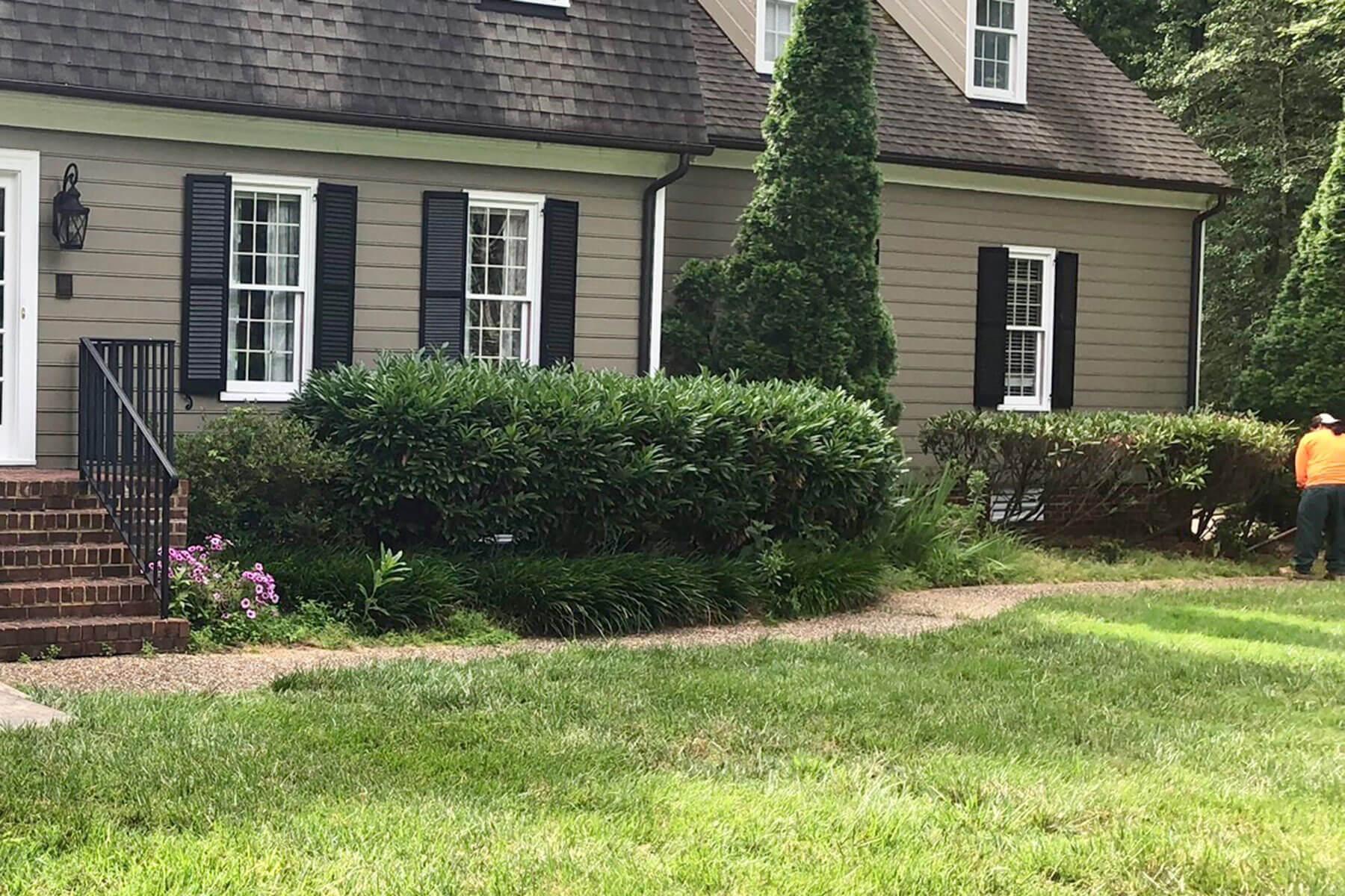 before shrub removal